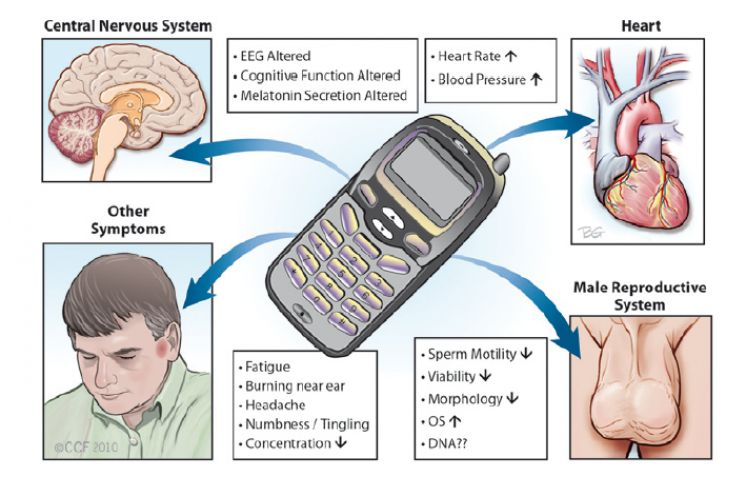 Cell Phones Causing Neurological Damage