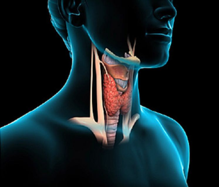 Are EMFs Suppressing Your Thyroid?